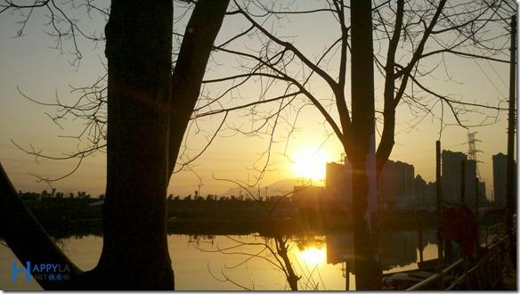 黄昏树木和夕阳
