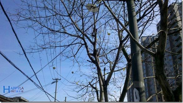 蓝天和树木